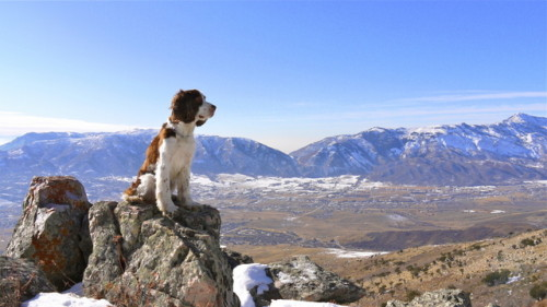 Bacio on table mountain