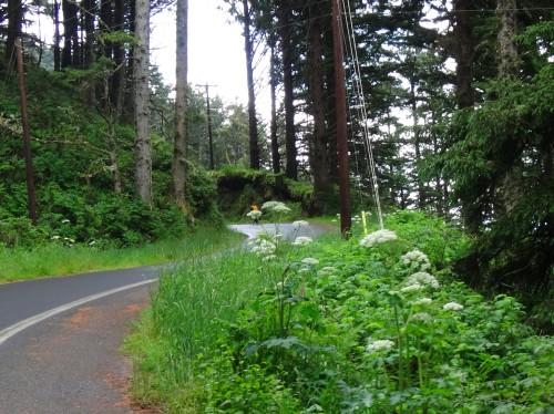 Nestucca River Road