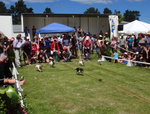 Terrier races for breast cancer charity
